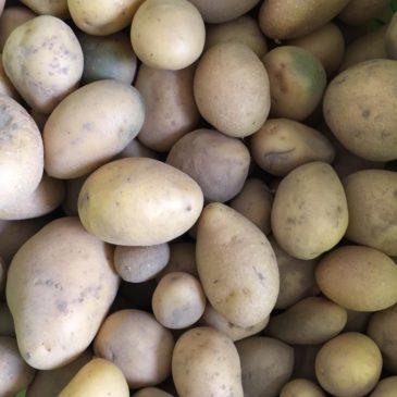 Ausflug auf den Kartoffelacker
